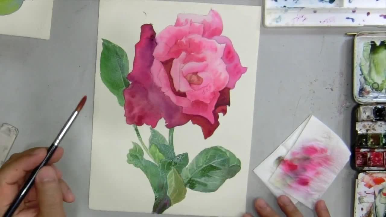 一朵深紅色的玫瑰花|黄永畅水彩画视频教学